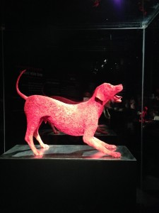 blood vessels of a dog