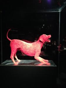 blood vessels of a dog