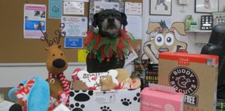 Titus models a small sampling of the seasonal treats and gifts available at Ma and Paws Bakery